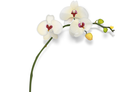orchid3.png